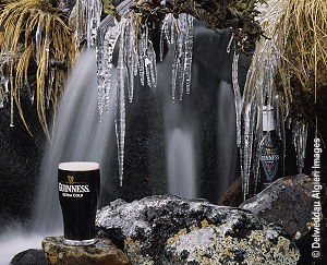 Photographs - Guinness and Icicles