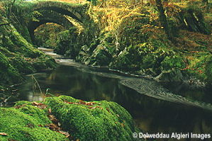 Photographs - Bridges over the River Machno