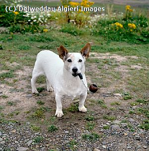 Photographs - Jack Russell