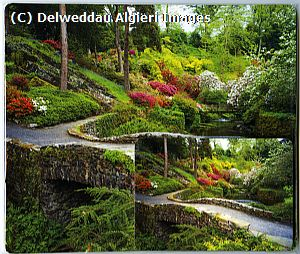 Placemat/Coaster sets - Bodnant Garden The Dell
