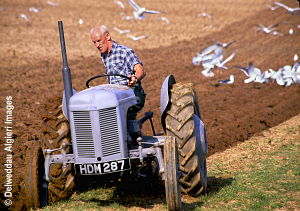 Photographs - Ploughing