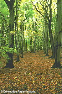Photographs - Deciduous Woodlands