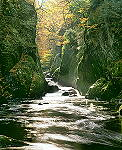 Fairy Glen Betws-y-Coed - click here for more info